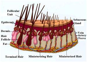 Трихолог. Выпадение волос. Рост волос.